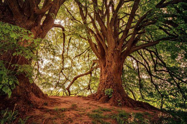 Tree 3369950 1920